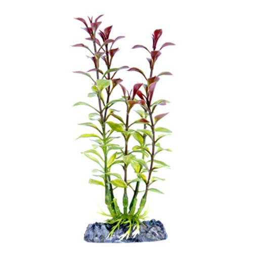 PENN PLAX Műnövény 15,24 cm Blooming Ludwigia (Red) S