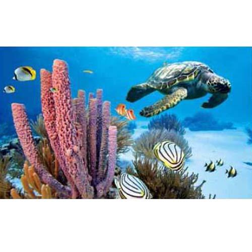 PENN PLAX Akvárium háttér 3-D 51x30,5cm Tengeri világ