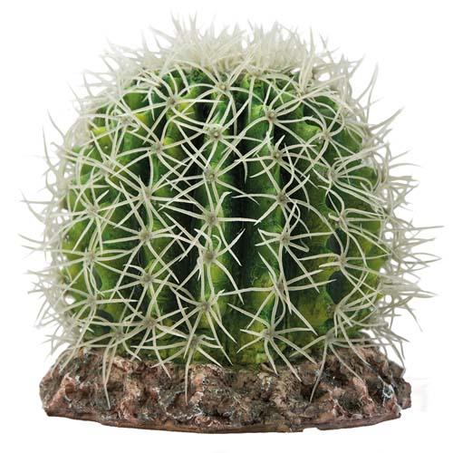 HOBBY Kaktusz Sonora M 15x15x13cm